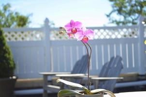 orchidées et beaux jours photo