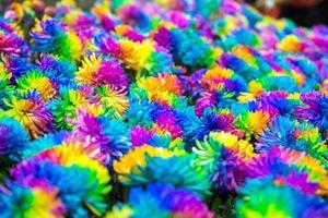 arc en ciel de fleurs