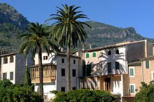 hôtel et palmiers