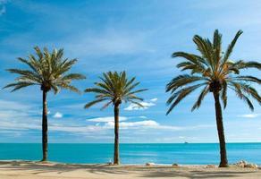 trois palmiers photo