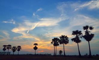 palmiers coucher de soleil, thaïlande photo