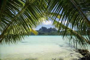 bora bora sous les palmiers photo