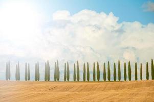 Cyprès sur fond de ciel bleu en Toscane, Italie