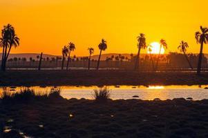 Palmiers à Rocha, Uruguay