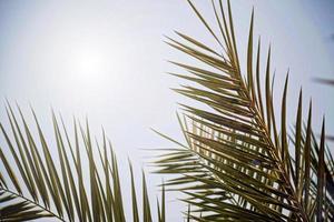 Gros plan des branches de palmier