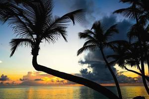 coucher de soleil silhouette de palmiers