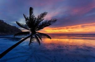 cocotiers silhouette sur la plage de sable photo