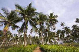 chemin vers les vacances tropicales photo