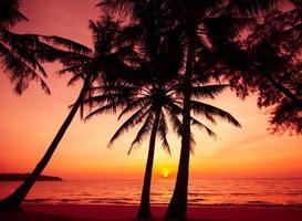 silhouette de palmiers sur la plage tropicale au coucher du soleil.