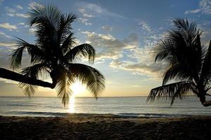 Palmier au coucher du soleil, kho kood thaïlande photo