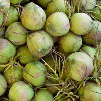 noix de coco verte à l'arbre