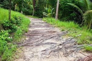 chemin à l'île de koh phangan photo