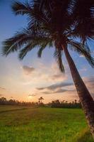 paysage coucher de soleil avec champ vert et palmier au sri lanka