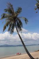 mer de palmiers et yacht
