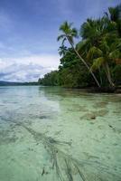 Lagune d'eau salée à uepi dans les îles salomon