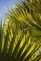 feuilles de palmier de plage photo