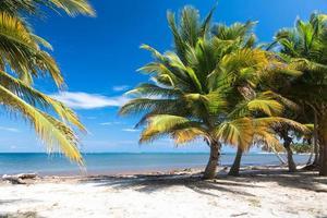 plage tropicale avec palmiers photo