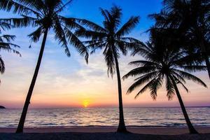 beau coucher de soleil tropical avec des palmiers. photo