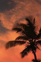 silhouette de palmier au coucher du soleil photo