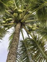 les tropiques en un coup d'œil