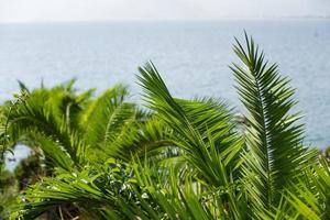 vue sur la mer à travers les branches de palmiers verts