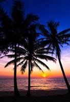 coucher de soleil sur la plage. silhouette de palmiers. photo