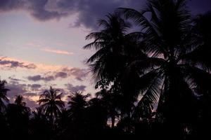 silhouette de palmiers sur une île tropicale au coucher du soleil
