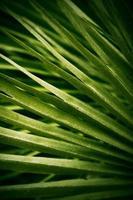 fond de feuille naturelle en vert photo