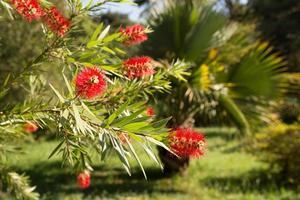 fleur tropicale rouge photo
