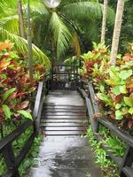 escalier vers la forêt tropicale photo