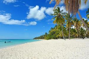 fond de plage tropicale photo