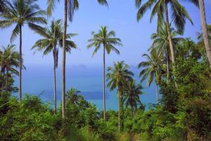 palmier avec journée ensoleillée. jungle de la Thaïlande. koh samui photo