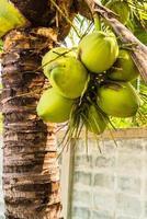Coco palmier vue en perspective depuis le sol