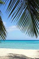 plage des Caraïbes, République dominicaine photo