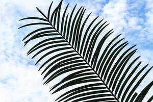 feuille de palmier. photo