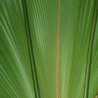 gros plan d'une feuille de palmier photo