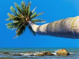 cocotier à la plage
