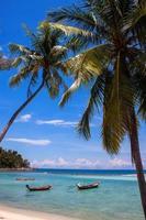 palmiers à la plage de haad yao photo
