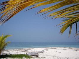 palmier - sable tropical photo