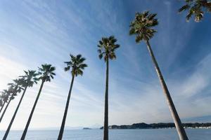 shonan bordé de palmiers