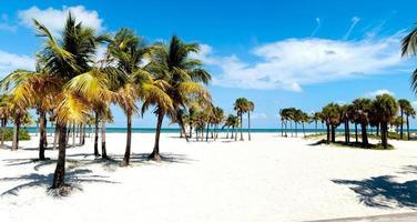 groupe de palmiers photo