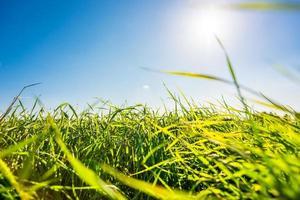 Le soleil de midi brille à travers l'herbe sur la prairie