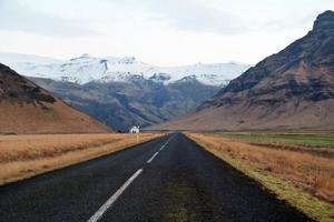 le long de la route noire islandaise