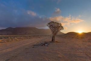 carquois arbre lever du soleil photo
