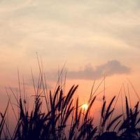 photo silhouette du coucher de soleil nature