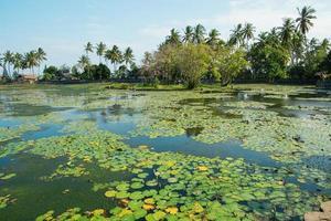 Belle lagune de lotus à candidasa, bali
