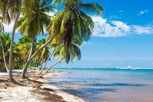 Plage tropicale intacte avec des palmiers en République dominicaine photo