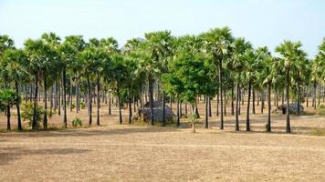 bidonville myanmar photo
