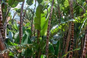 végétation tropicale
