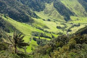 cocora valley, parc naturel de la colombie